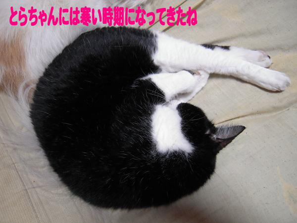 9.13とらちゃん2