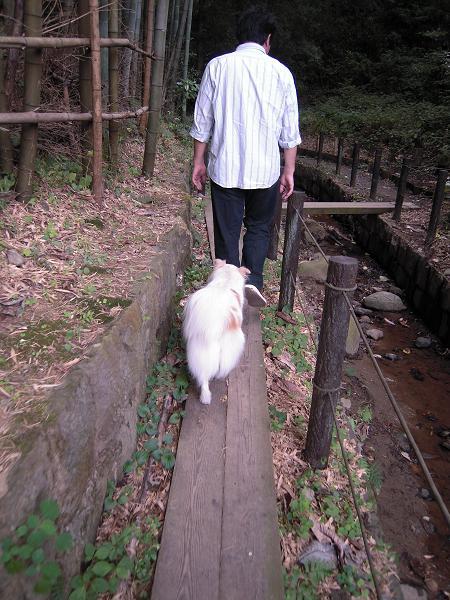 9.19お散歩1