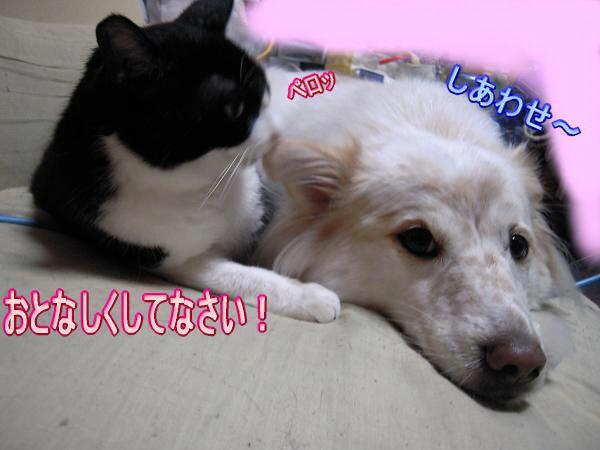 9.22とら&モコ4
