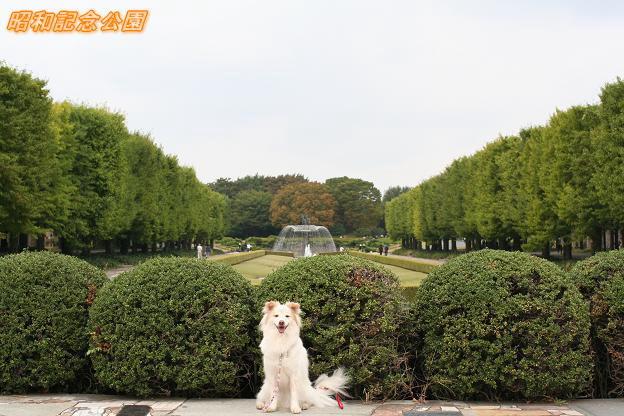 9.27昭和記念公園1