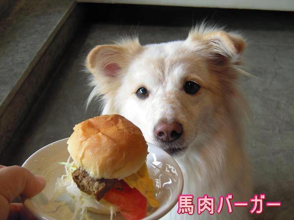 10.9馬肉バーガーとモコ