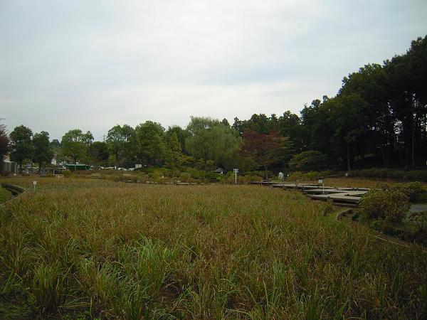 10.23上尾丸山公園3