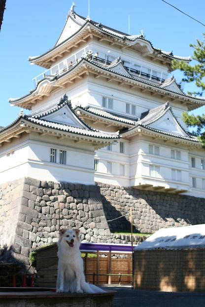 10.27モコと小田原城