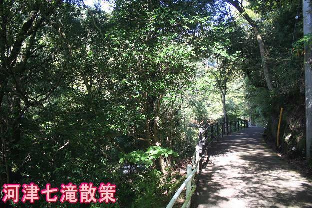 10.28河津七滝1