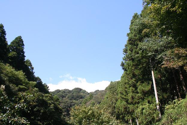 10.28河津七滝5
