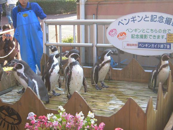 10.28ペンギンさん