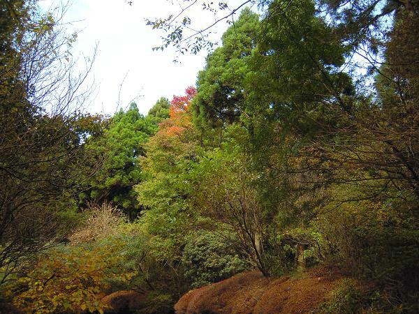 10.29箱根やすらぎの森3