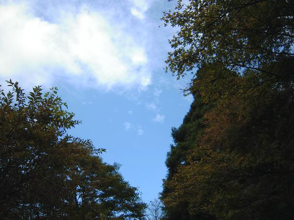10.29箱根やすらぎの森5