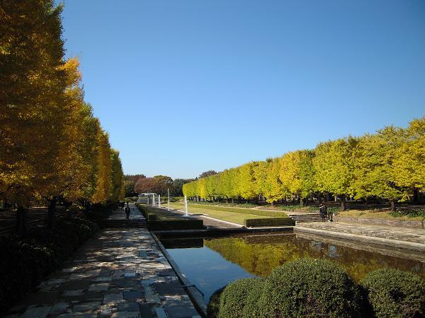 11.4昭和記念公園1
