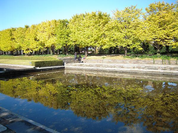 11.4昭和記念公園2