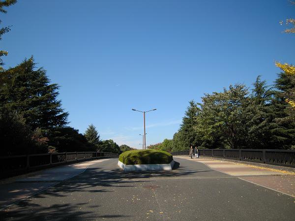 11.4昭和記念公園6