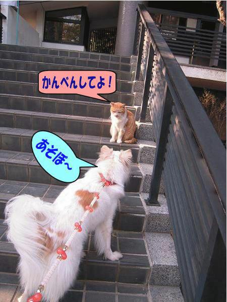 11.6あそぼ〜