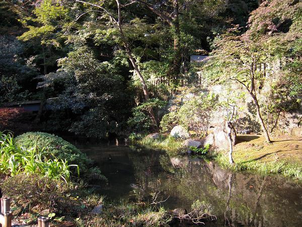 11.6お寺の池