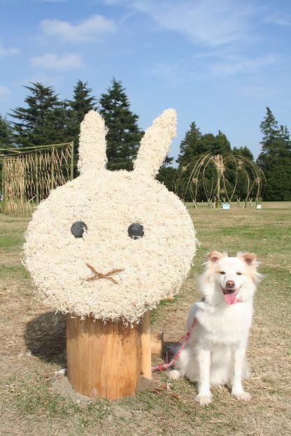 11.9昭和記念公園7