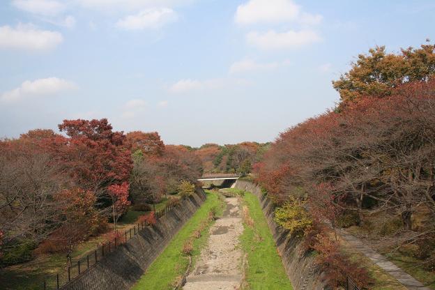 11.9昭和記念公園8