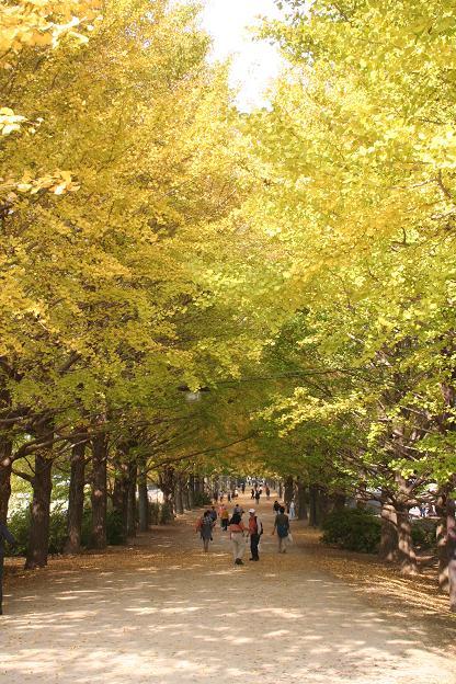 11.9昭和記念公園14