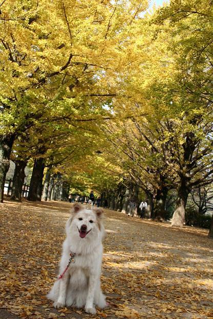 11.9昭和記念公園15