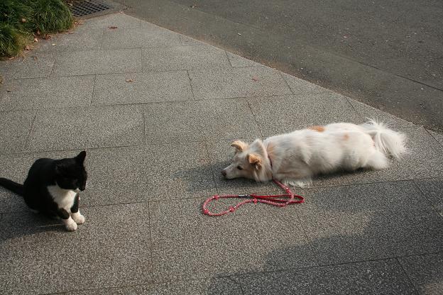 11.9モコと猫さん