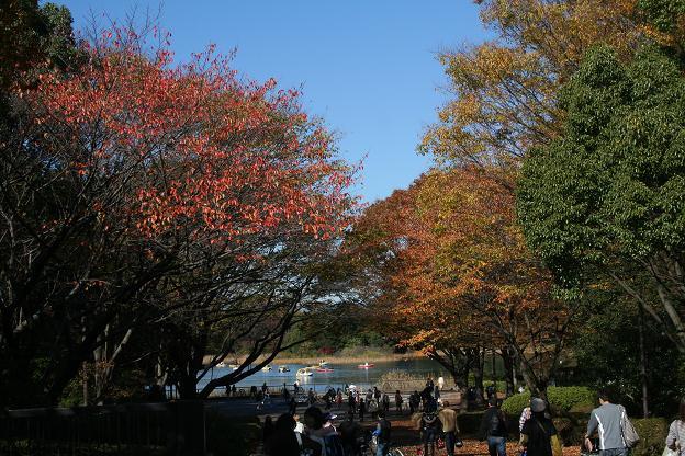 11.15昭和記念公園