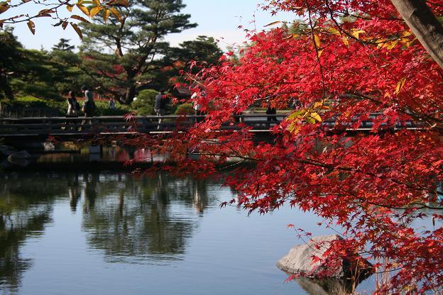 11.15日本庭園1