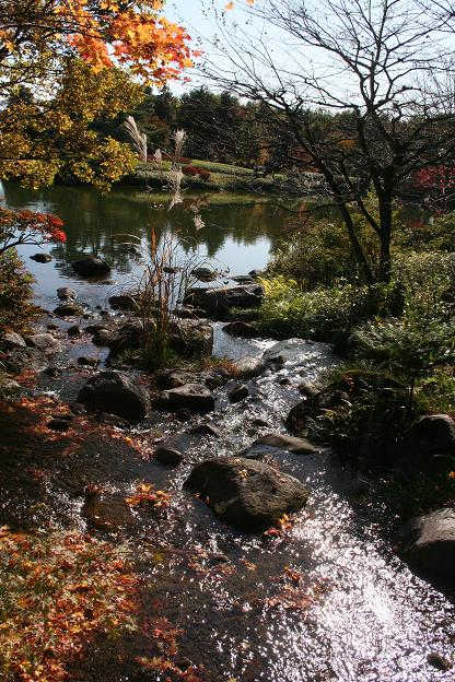 11.15日本庭園4