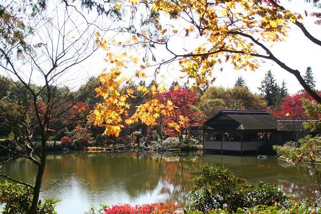 11.15日本庭園