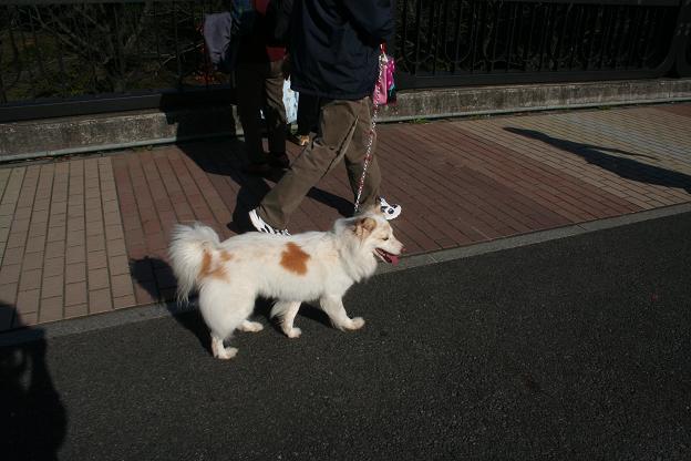 11.15お散歩