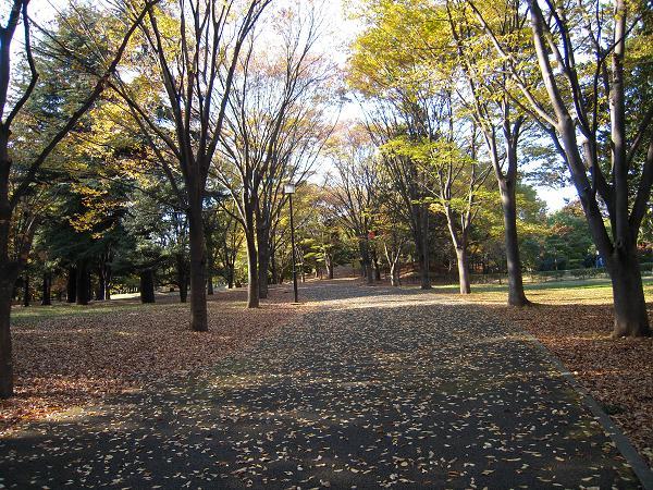 11.21府中の森公園7