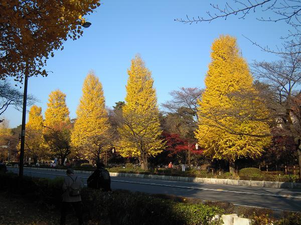 11.26国立お散歩1