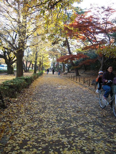 11.26国立お散歩6
