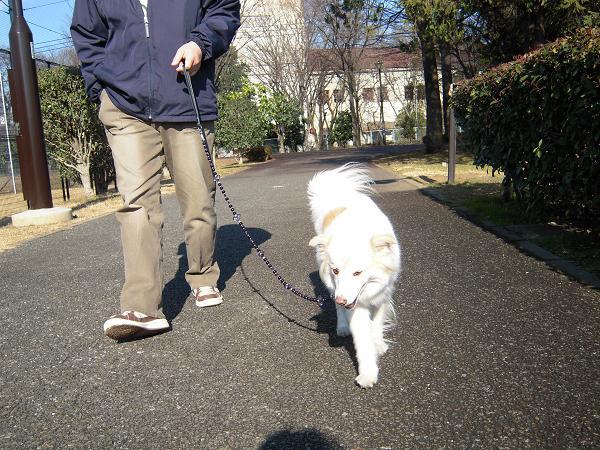 1.5お散歩3