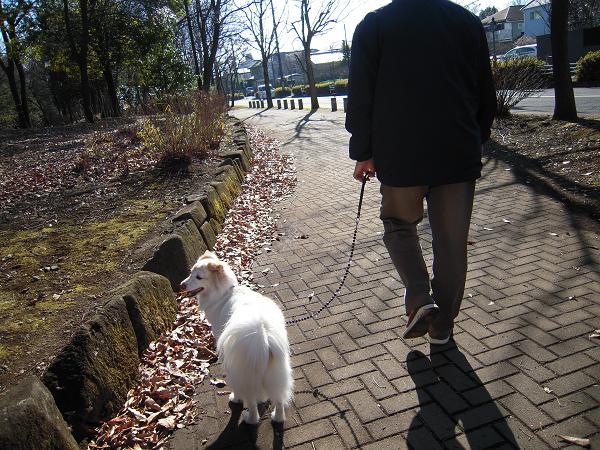 1.5お散歩4