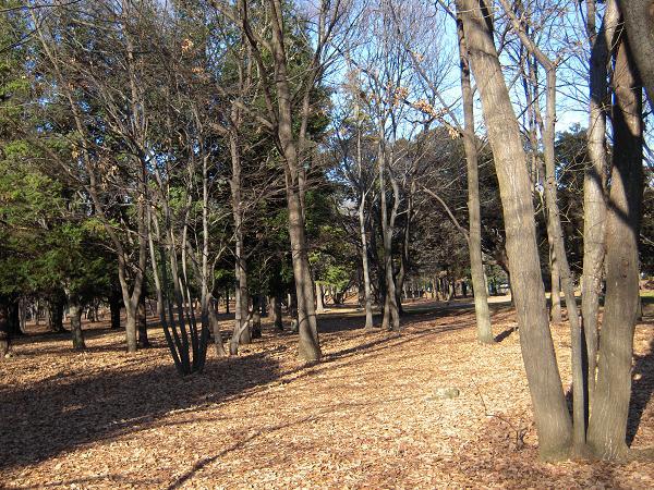 1.5森公園1