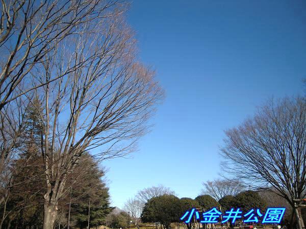 1.8小金井公園