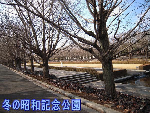 1.22冬の公園