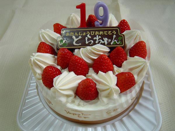 3.3とらちゃんのケーキ