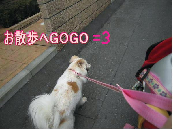 3.15お散歩へGO