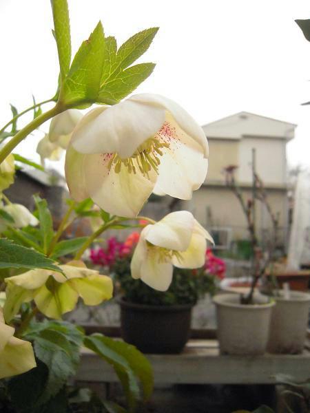 3.15お花1