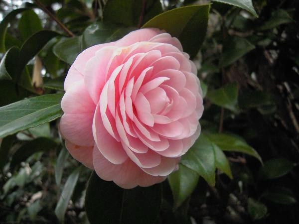 3.15お花3