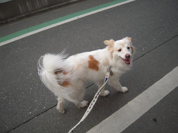 3.17駅前お散歩2