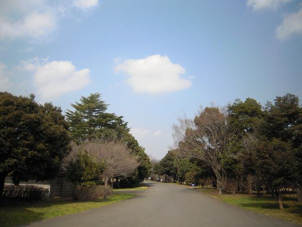 3.18昭和記念公園1