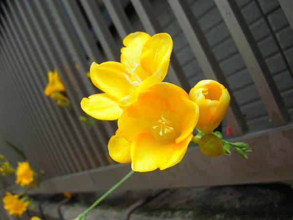 4.30お花