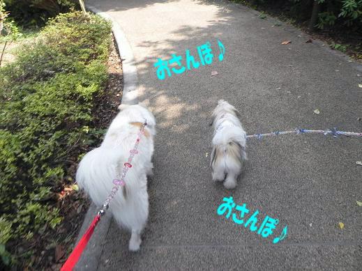 9.19お散歩