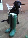 wellington boots & Felix