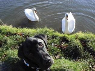 Felix & swans