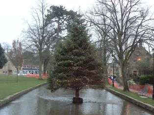 Bourton on the water tree