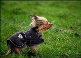 windy 4