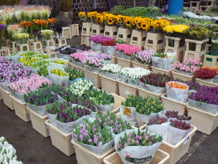 flower market tulips