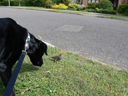 Felix & a bird