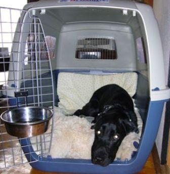 犬連れ渡航